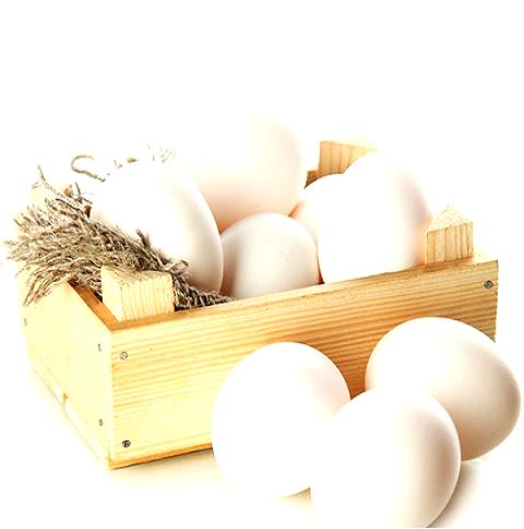 تخم مرغ (شهری)
